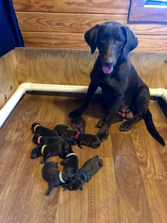 puppies 2 5 172